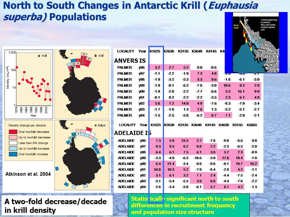 ADELAIDE IS ANVERS IS Statistically significant north to south differences in recruitment frequency and population size structure North to South Changes in Antarctic Krill (Euphausia superba) Populations Atkinson et al.