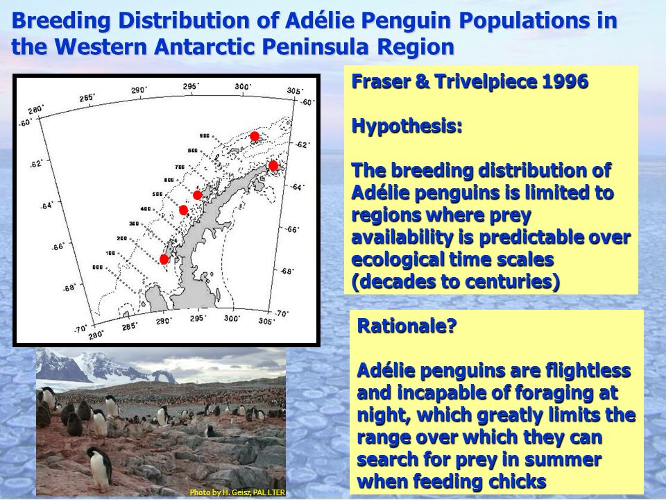 Breeding Distribution of Adélie Penguin Populations in the Western Antarctic Peninsula Region Photo by H.