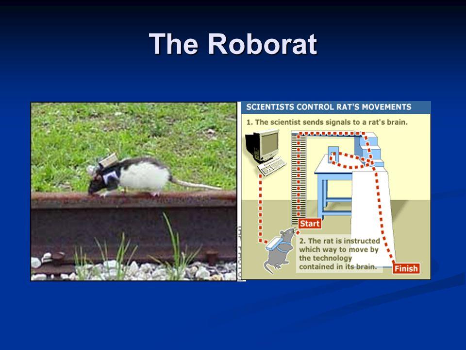 The Roborat