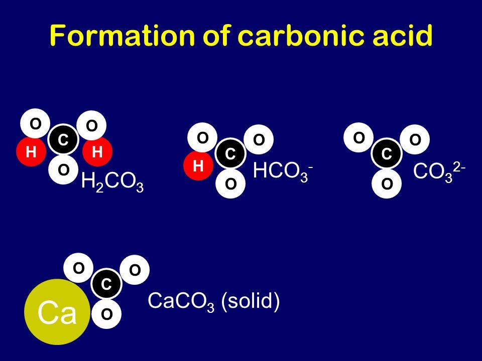 Formation of carbonic acid C O O O Ca H C O O O HCO 3 - C O O O CO 3 2- HH C O O O H 2 CO 3 CaCO 3 (solid)