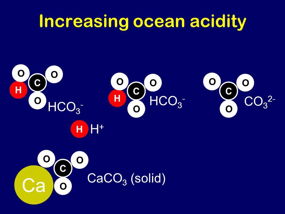 Increasing ocean acidity C O O O Ca H C O O O HCO 3 - C O O O CO 3 2- H C O O O HCO 3 - H H+H+ CaCO 3 (solid)