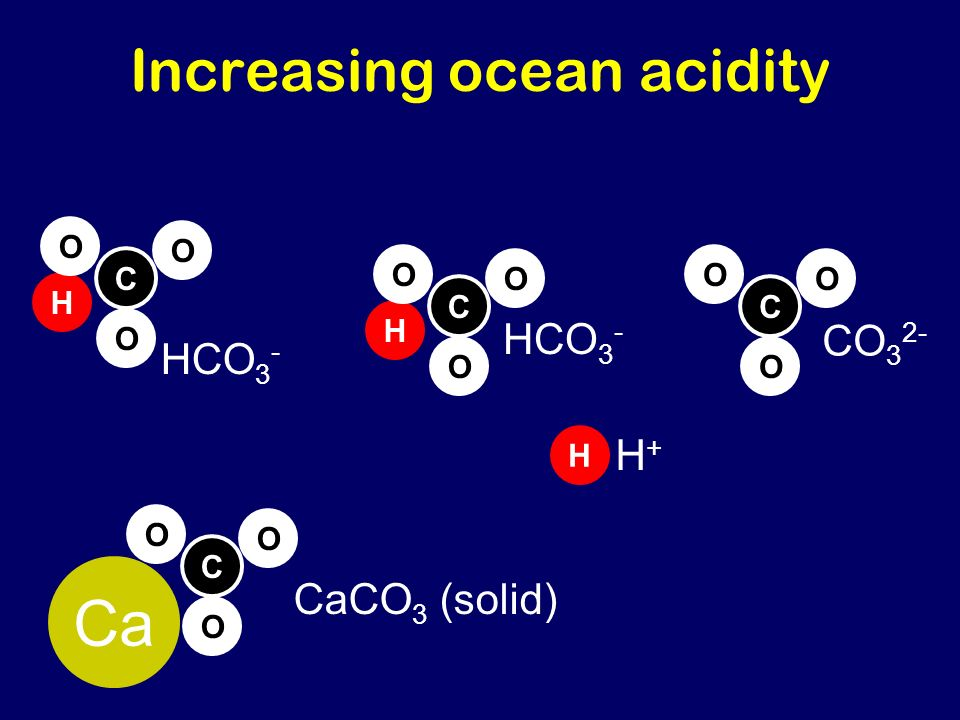 Increasing ocean acidity CaCO 3 (solid) C O O O Ca H C O O O HCO 3 - C O O O CO 3 2- H C O O O HCO 3 - H H+H+
