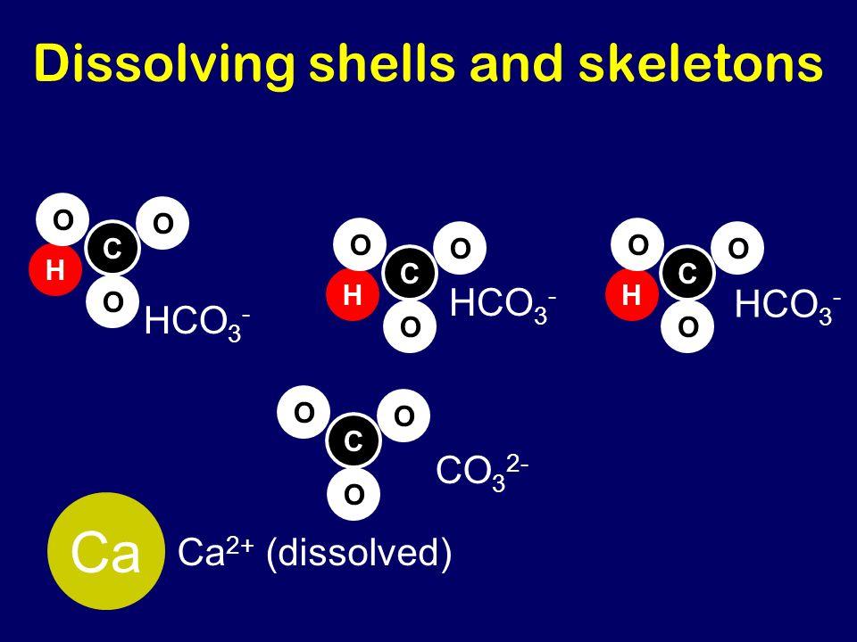 H Dissolving shells and skeletons CO 3 2- C O O O H C O O O HCO 3 - C O O O H C O O O Ca Ca 2+ (dissolved)