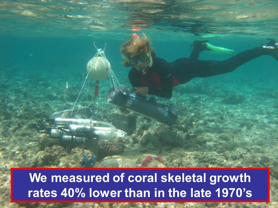 We measured of coral skeletal growth rates 40% lower than in the late 1970s