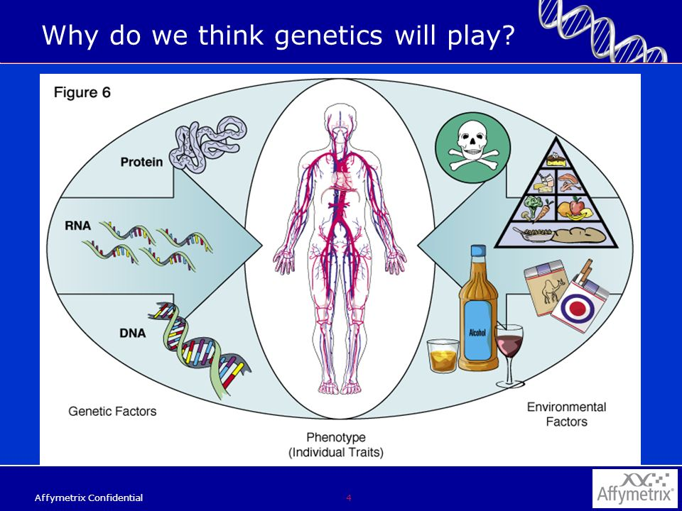 4 Affymetrix Confidential Why do we think genetics will play?