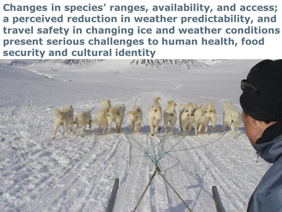 23 Changes in species ranges, availability, and access; a perceived reduction in weather predictability, and travel safety in changing ice and weather conditions present serious challenges to human health, food security and cultural identity