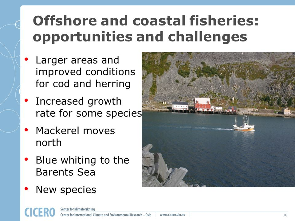 30 Offshore and coastal fisheries: opportunities and challenges Larger areas and improved conditions for cod and herring Increased growth rate for some species Mackerel moves north Blue whiting to the Barents Sea New species