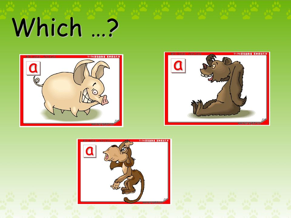 Which animal is …?