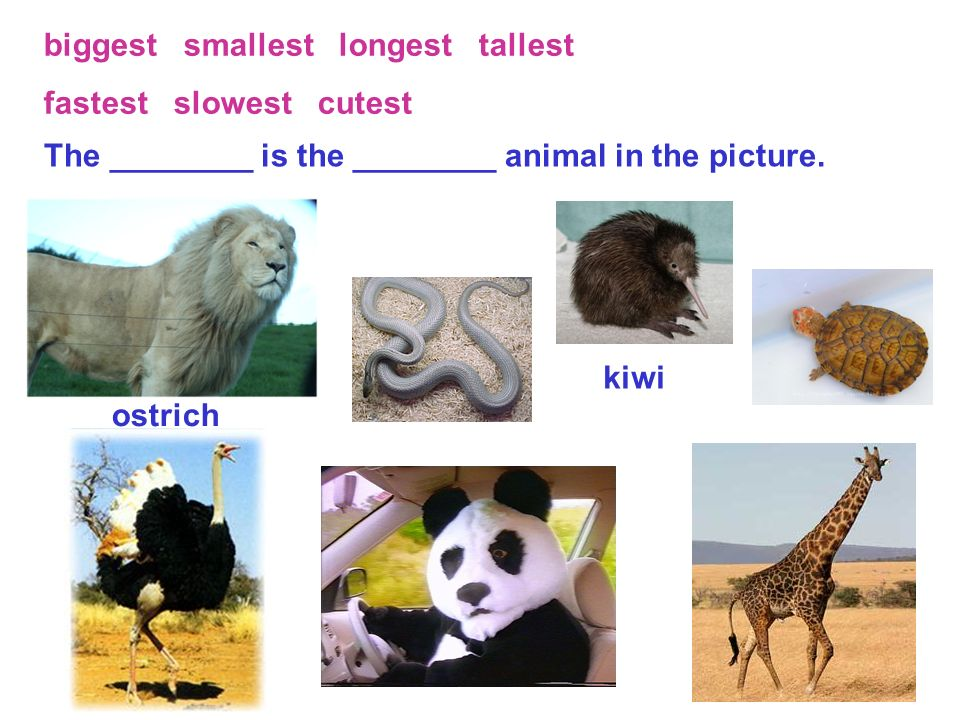 biggest smallest longest tallest fastest slowest cutest The ________ is the ________ animal in the picture.