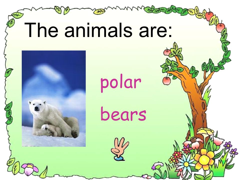 The animals are: polar bears