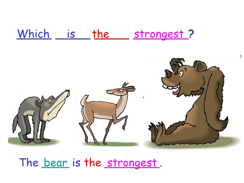 _____ _____ _____ ________ The ____ is the ________. Whichis the strongest bearstrongest