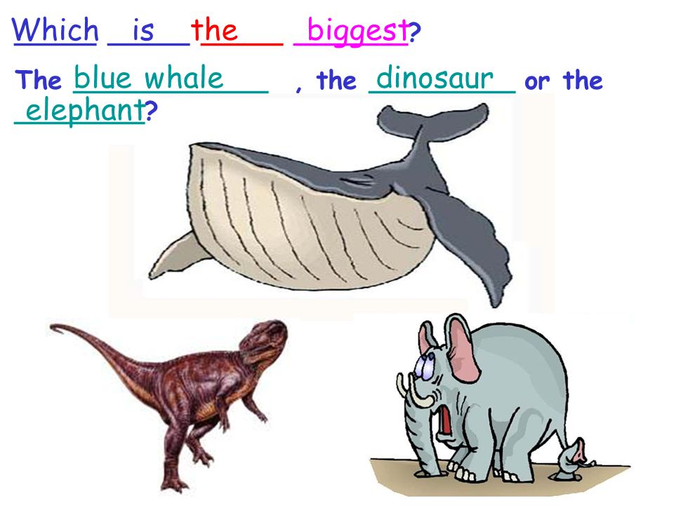 _____ _____ _____ _______? The ____________, the _________ or the ________? blue whaledinosaur elephant Whichis thebiggest