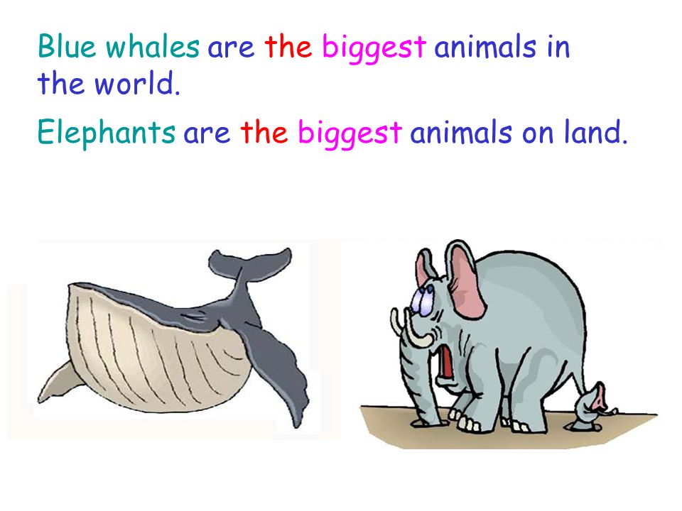 Blue whales are the biggest animals in the world. Elephants are the biggest animals on land.