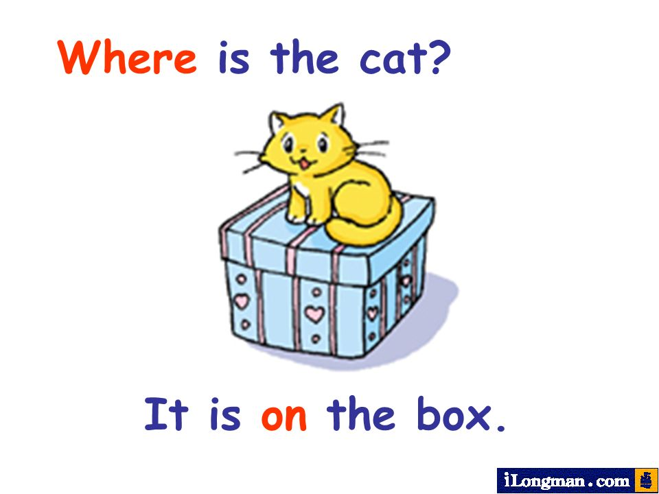 Where is the cat? It is on the box.