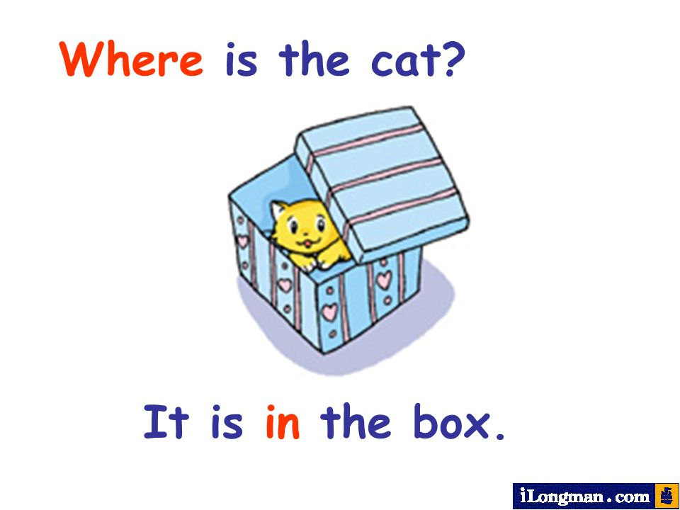 Where is the cat? It is in the box.