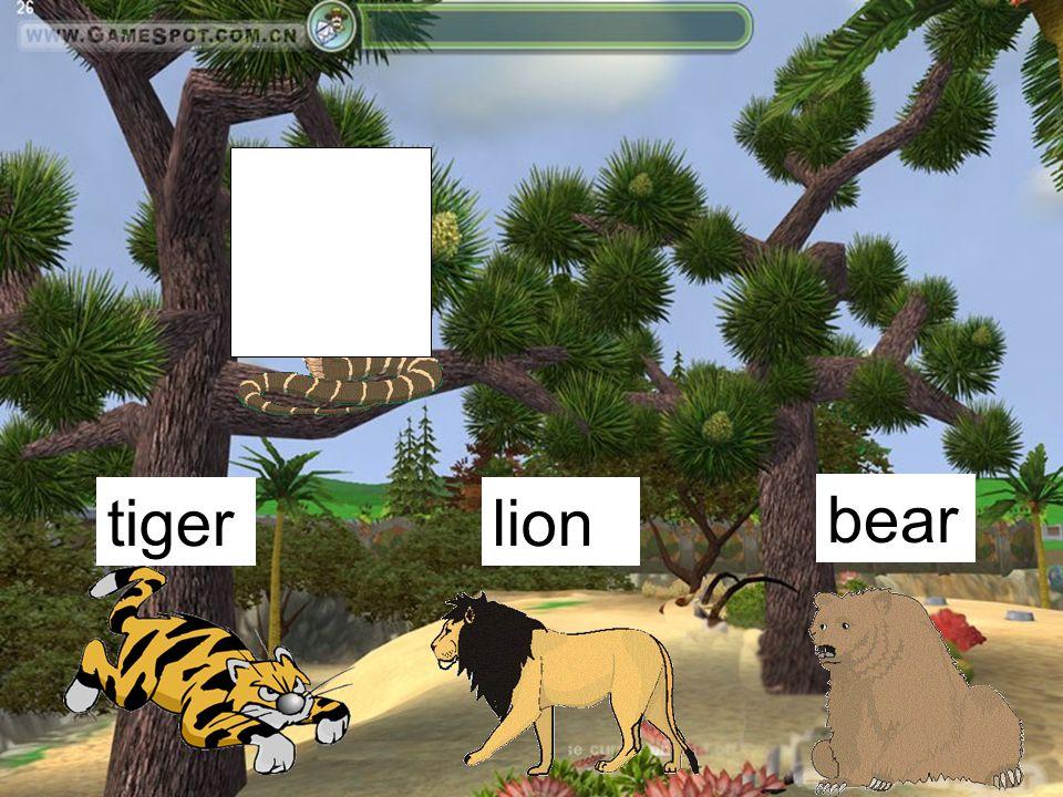 tigerlion bear