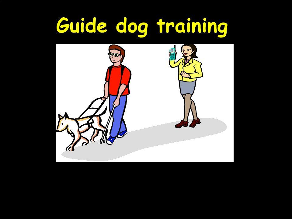 Guide dog training