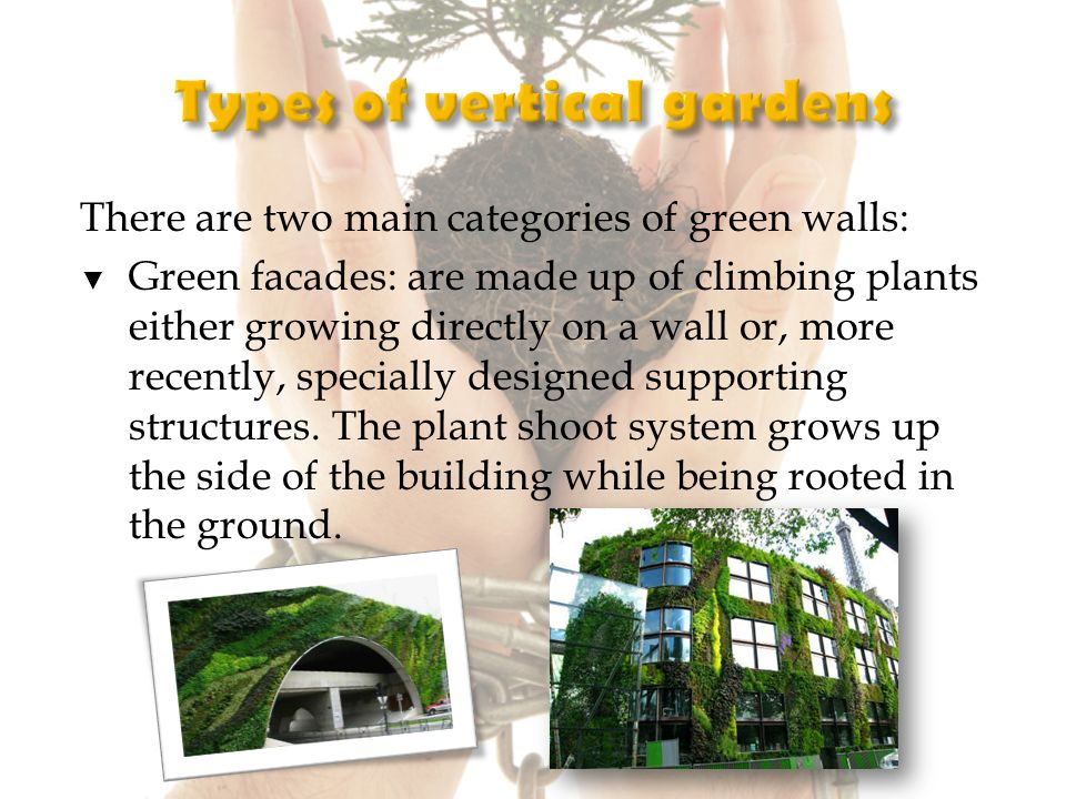 There are two main categories of green walls: Green facades: are made up of climbing plants either growing directly on a wall or, more recently, specially designed supporting structures.