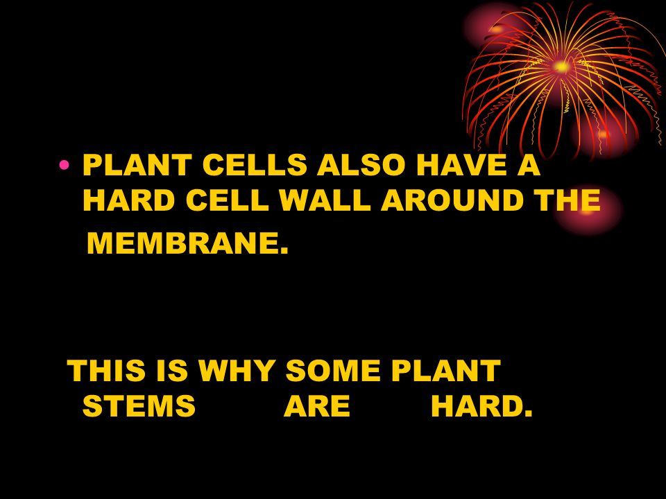 PLANT CELLS ALSO HAVE A HARD CELL WALL AROUND THE MEMBRANE. THIS IS WHY SOME PLANT STEMS ARE HARD.