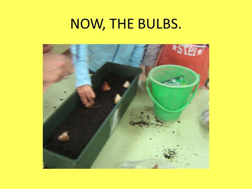 NOW, THE BULBS.