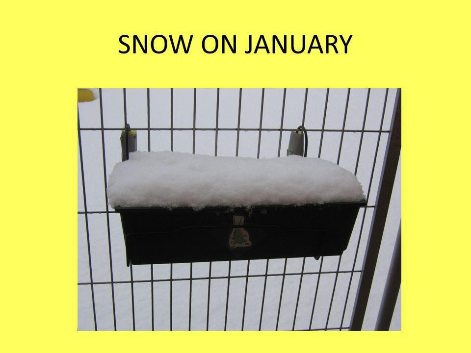 SNOW ON JANUARY