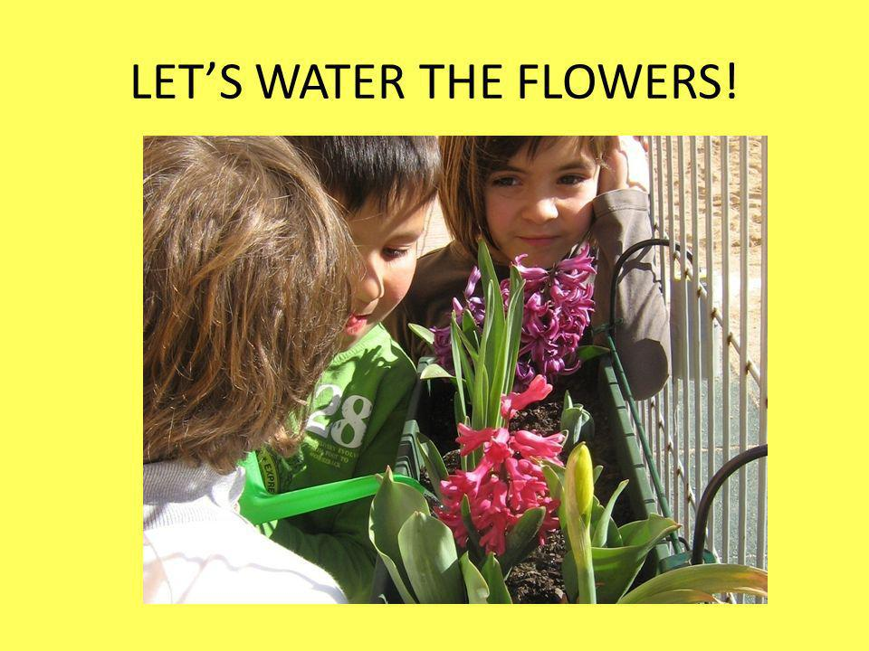 LETS WATER THE FLOWERS!