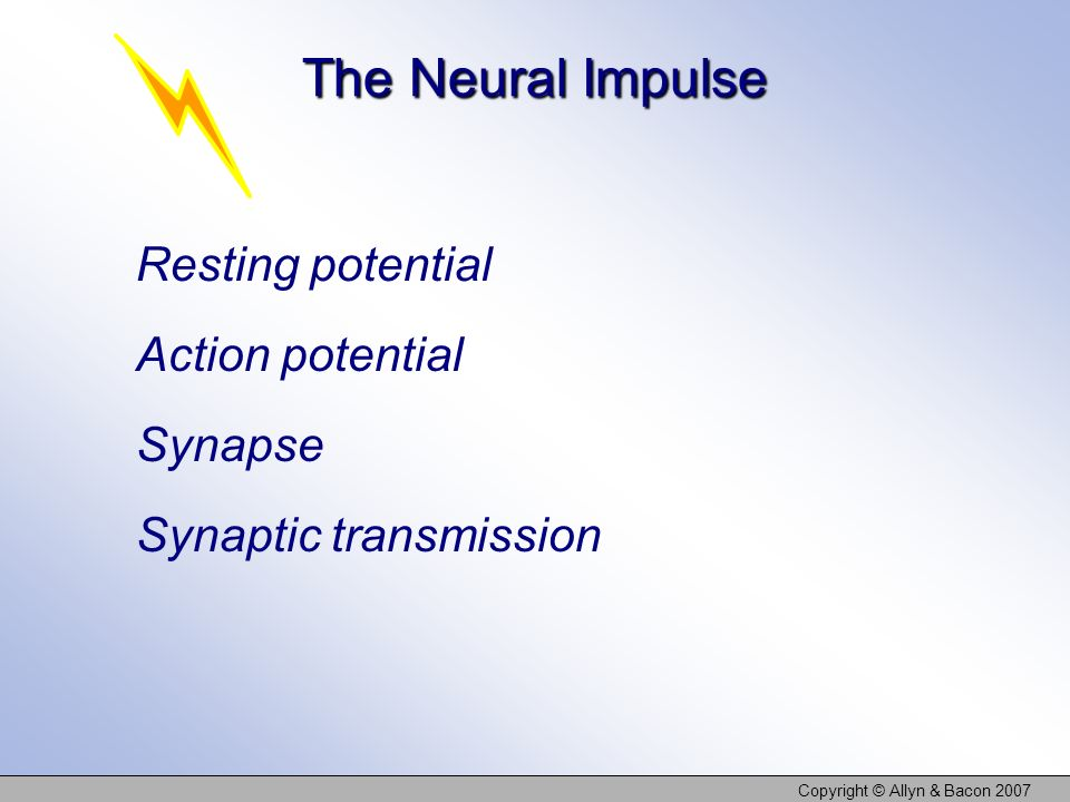 Copyright © Allyn & Bacon 2007 The Neural Impulse Resting potential Action potential Synapse Synaptic transmission