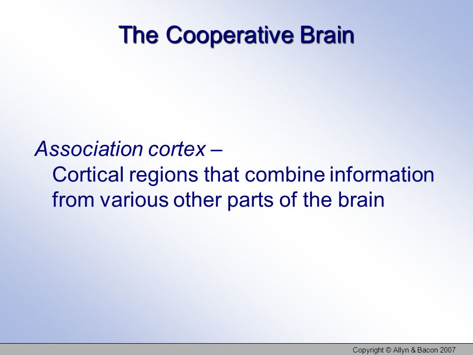 Copyright © Allyn & Bacon 2007 The Cooperative Brain Association cortex – Cortical regions that combine information from various other parts of the br