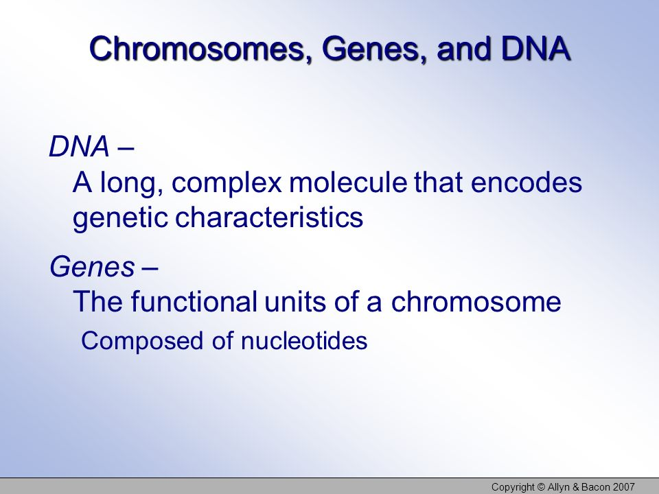 Copyright © Allyn & Bacon 2007 Chromosomes, Genes, and DNA DNA – A long, complex molecule that encodes genetic characteristics Genes – The functional