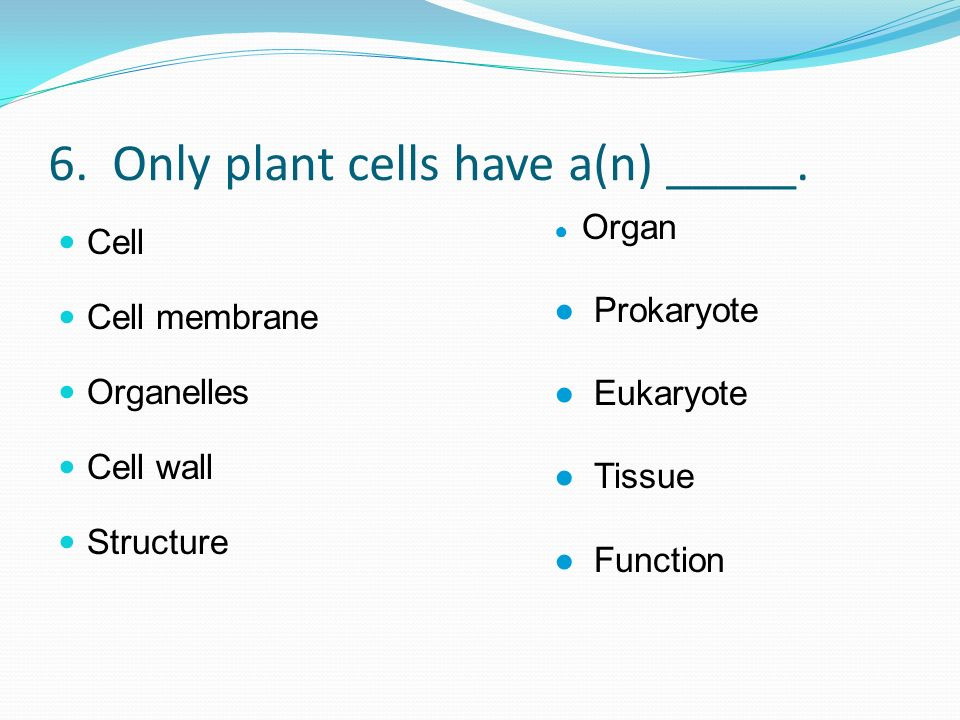 6. Only plant cells have a(n) _____. Cell Cell membrane Organelles Cell wall Structure Organ Prokaryote Eukaryote Tissue Function