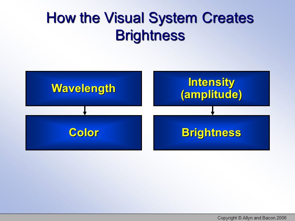 Copyright © Allyn and Bacon 2006 How the Visual System Creates Brightness Wavelength Color Intensity (amplitude) Brightness