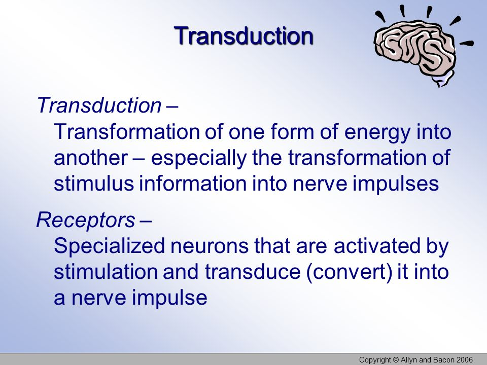 Copyright © Allyn and Bacon 2006 Transduction Transduction – Transformation of one form of energy into another – especially the transformation of stim