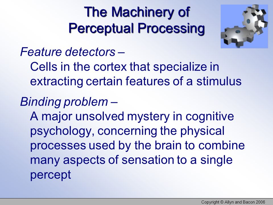 Copyright © Allyn and Bacon 2006 The Machinery of Perceptual Processing Feature detectors – Cells in the cortex that specialize in extracting certain