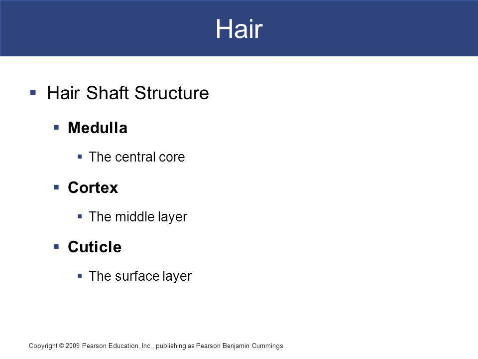 Copyright © 2009 Pearson Education, Inc., publishing as Pearson Benjamin Cummings Hair Hair Shaft Structure Medulla The central core Cortex The middle layer Cuticle The surface layer
