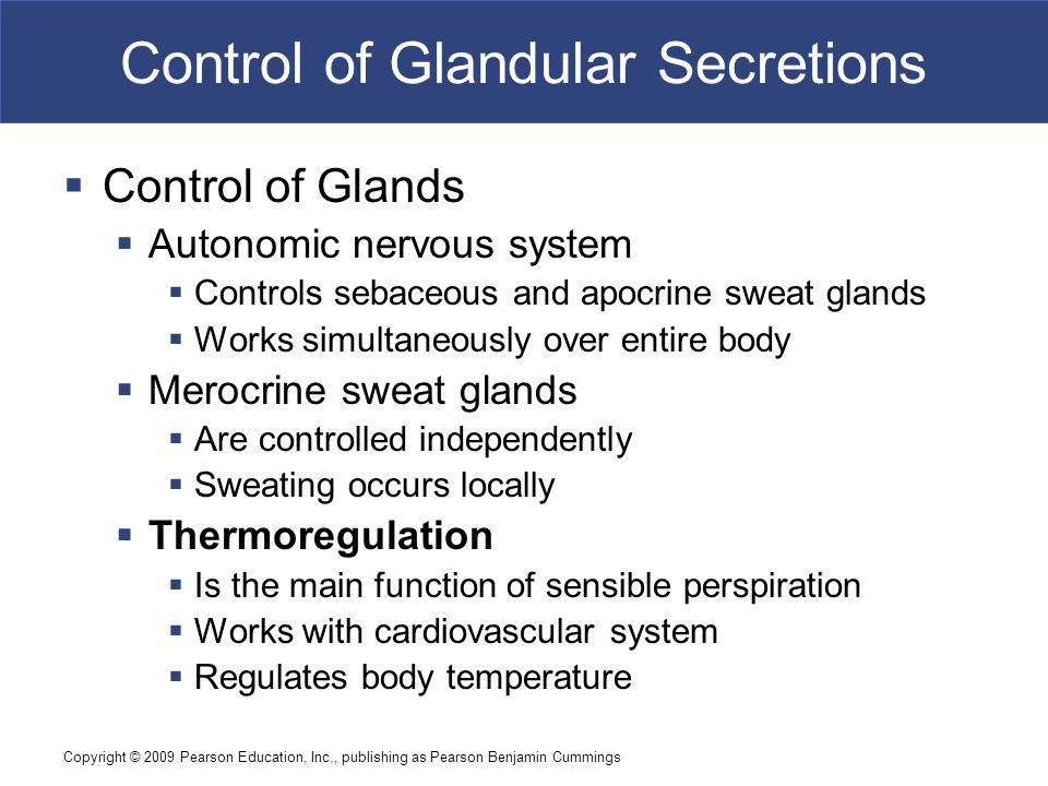 Copyright © 2009 Pearson Education, Inc., publishing as Pearson Benjamin Cummings Control of Glandular Secretions Control of Glands Autonomic nervous system Controls sebaceous and apocrine sweat glands Works simultaneously over entire body Merocrine sweat glands Are controlled independently Sweating occurs locally Thermoregulation Is the main function of sensible perspiration Works with cardiovascular system Regulates body temperature