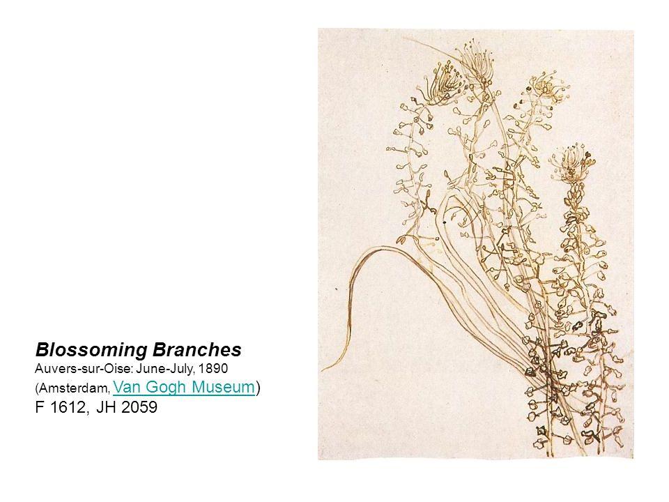 Branch with Leaves Auvers-sur-Oise: June-July, 1890 (Amsterdam, Van Gogh Museum) F 1614, JH 2060 Van Gogh Museum