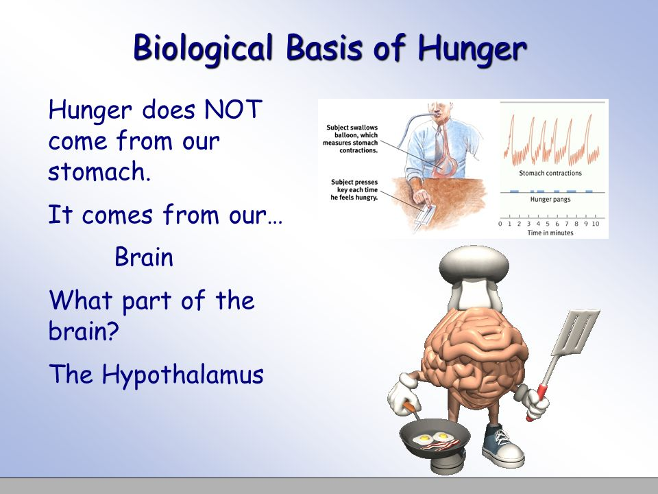 Biological Basis of Hunger Hunger does NOT come from our stomach. It comes from our… Brain What part of the brain? The Hypothalamus