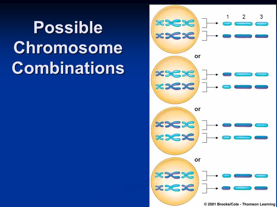 Possible Chromosome Combinations or 123