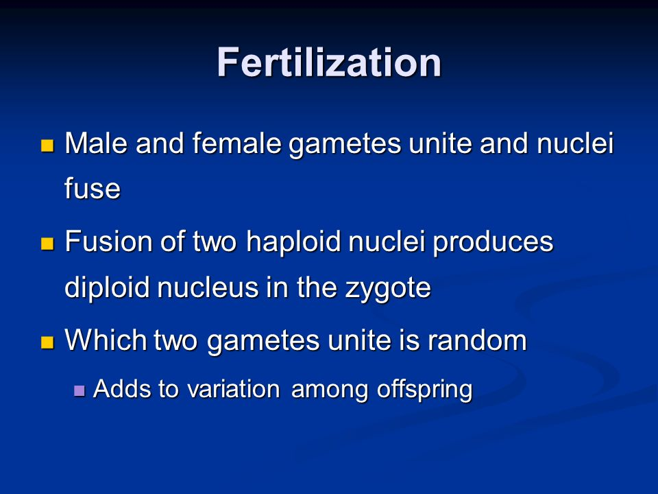 Fertilization Male and female gametes unite and nuclei fuse Male and female gametes unite and nuclei fuse Fusion of two haploid nuclei produces diploid nucleus in the zygote Fusion of two haploid nuclei produces diploid nucleus in the zygote Which two gametes unite is random Which two gametes unite is random Adds to variation among offspring Adds to variation among offspring