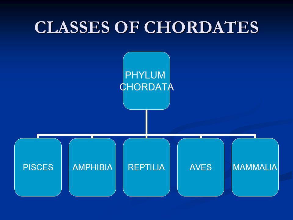 CLASSES OF CHORDATES PHYLUM CHORDATA PISCESAMPHIBIAREPTILIAAVESMAMMALIA