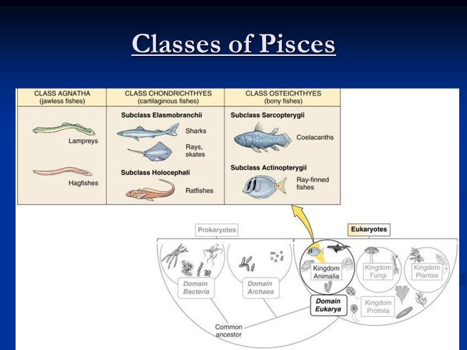Classes of Pisces