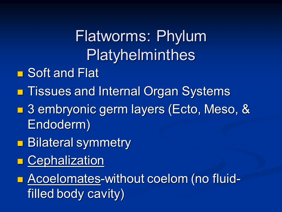 Flatworms: Phylum Platyhelminthes Soft and Flat Soft and Flat Tissues and Internal Organ Systems Tissues and Internal Organ Systems 3 embryonic germ l