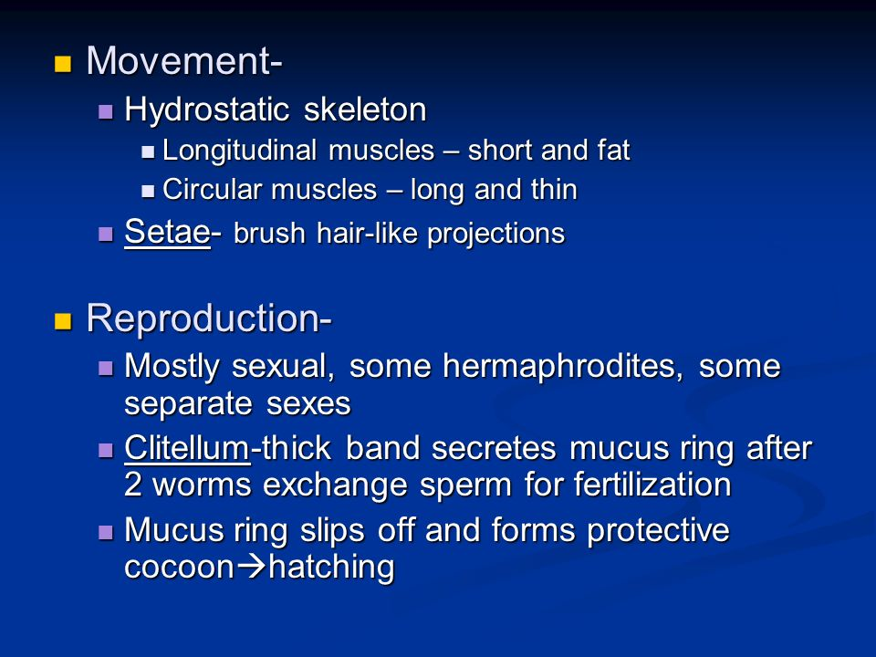 Movement- Movement- Hydrostatic skeleton Hydrostatic skeleton Longitudinal muscles – short and fat Longitudinal muscles – short and fat Circular muscl