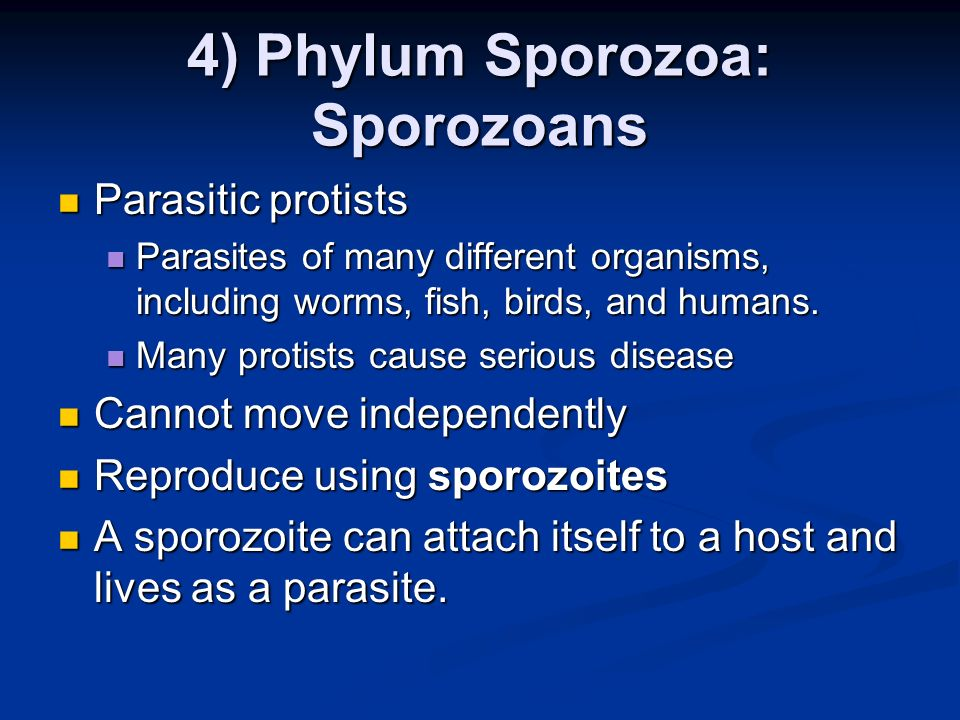 4) Phylum Sporozoa: Sporozoans Parasitic protists Parasitic protists Parasites of many different organisms, including worms, fish, birds, and humans.