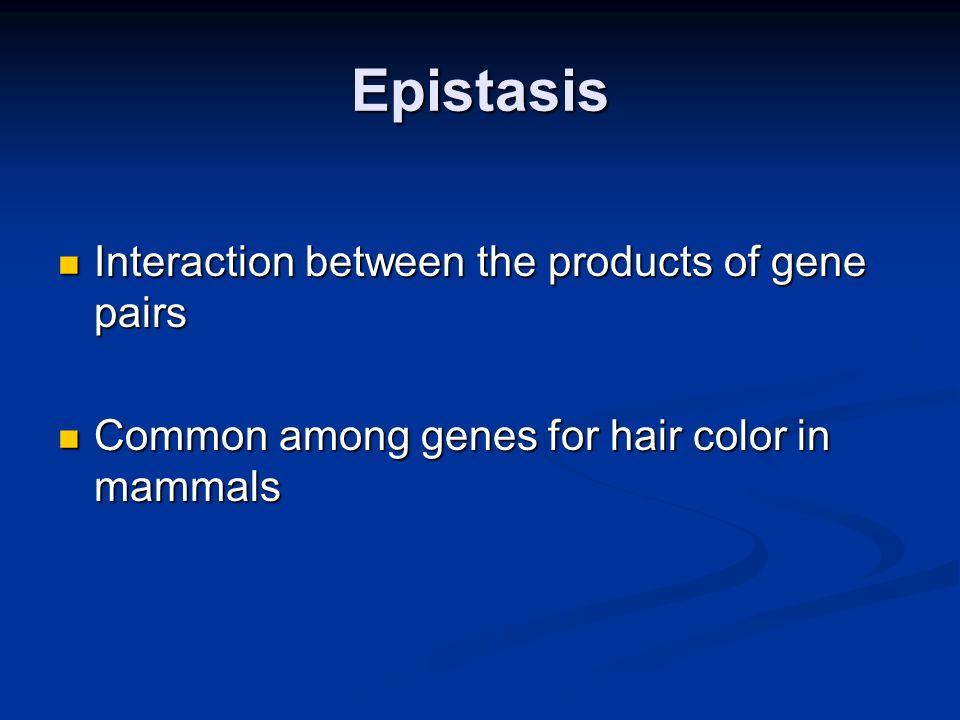 Epistasis Interaction between the products of gene pairs Interaction between the products of gene pairs Common among genes for hair color in mammals C