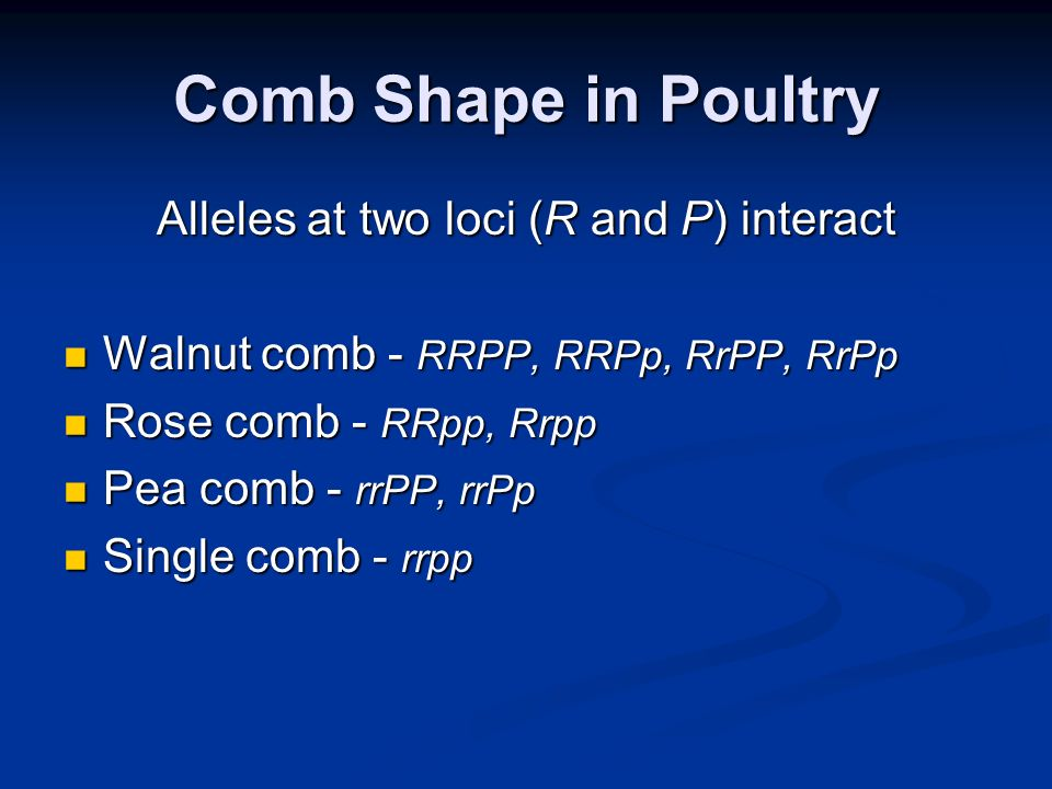 Comb Shape in Poultry Alleles at two loci (R and P) interact Walnut comb - RRPP, RRPp, RrPP, RrPp Walnut comb - RRPP, RRPp, RrPP, RrPp Rose comb - RRp