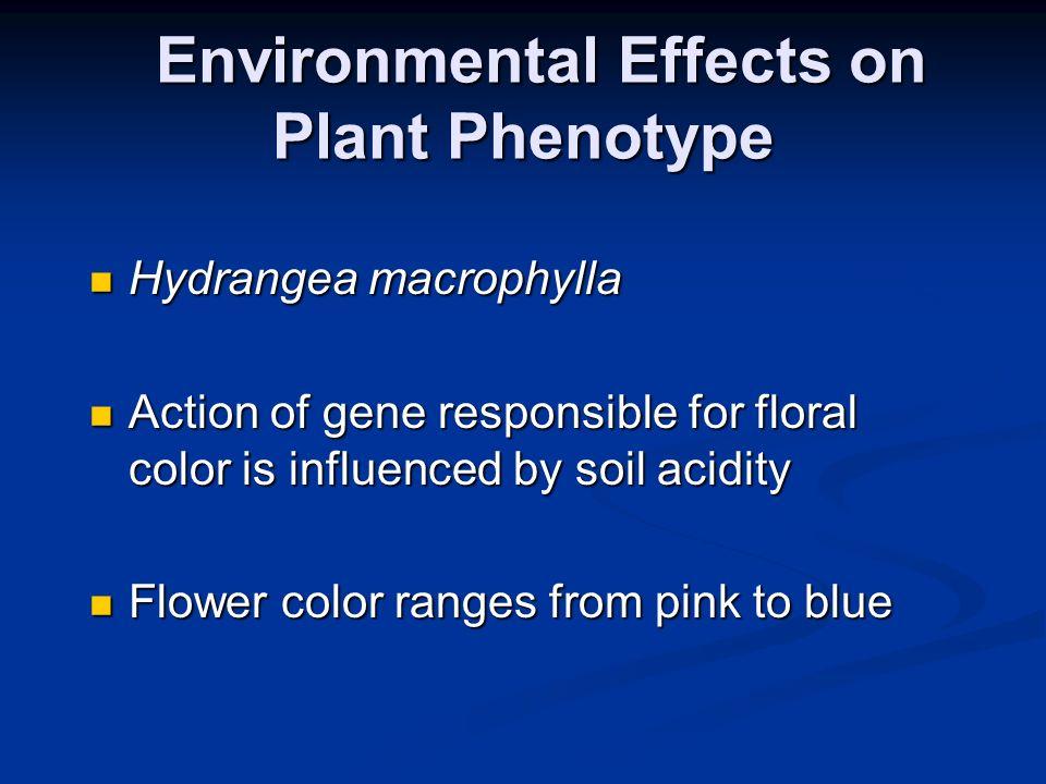 Environmental Effects on Plant Phenotype Environmental Effects on Plant Phenotype Hydrangea macrophylla Hydrangea macrophylla Action of gene responsib