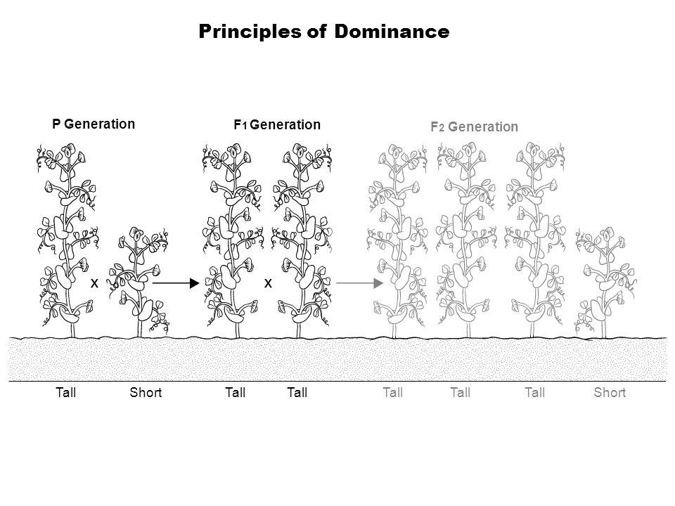 P Generation F 1 Generation F 2 Generation TallShortTall Short Principles of Dominance