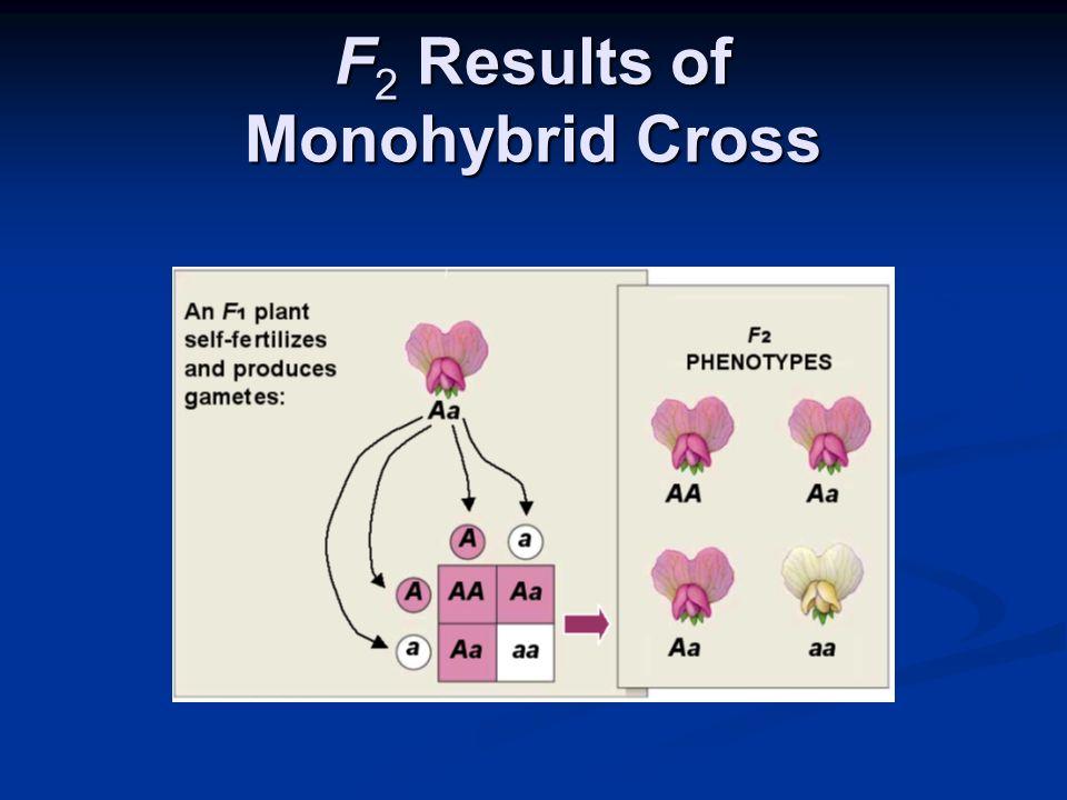 F 2 Results of Monohybrid Cross