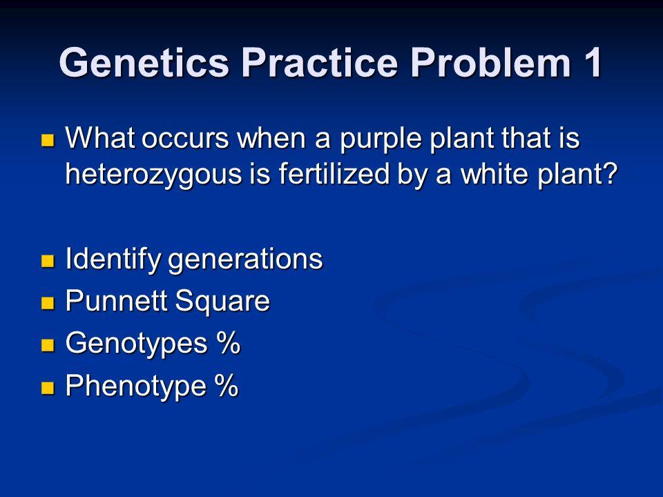 Genetics Practice Problem 1 What occurs when a purple plant that is heterozygous is fertilized by a white plant? What occurs when a purple plant that